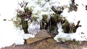 Śniegi zakrywający drzewa w Walloon Ardennes zbiory