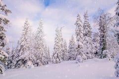 Śniegi zakrywający jedlinowi drzewa w górach zdjęcie royalty free