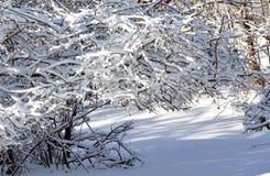 Śniegi zakrywający krzaki. Zdjęcia Royalty Free