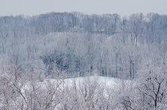 Śniegi zakrywający zim drzewa Zdjęcia Royalty Free