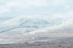 Śniegi zakrywający zima winnicy Obrazy Stock
