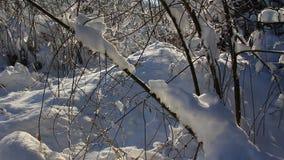 Śniegu krajobraz zbiory