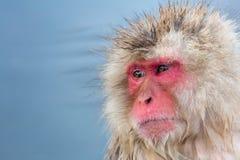Śniegu małpi makak Onsen zdjęcia stock