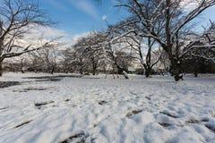 Śniegu parkowy śnieg zakrywający i niebieskie niebo Obraz Royalty Free