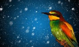 Śniegu spadać i barwiony ptak Fotografia Royalty Free