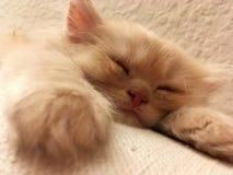 Śpiąca śliczna figlarka w kanapie zdjęcia stock