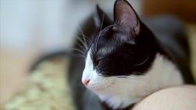 Śpiąca figlarka rusza się jego ucho zbiory wideo