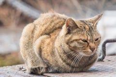Śpiący gruby kot siedzi ostro fotografia royalty free