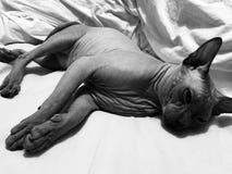 Śpiący kot zdjęcia royalty free