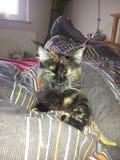 Śpiący kot Fotografia Royalty Free