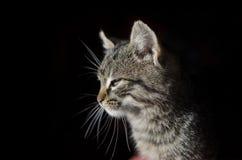 Śpiący kot Zdjęcie Royalty Free