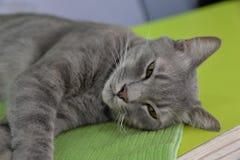 Śpiący kot obraz royalty free