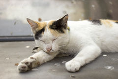 Śpiący kot Obrazy Stock