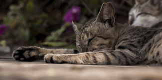 Śpiący kot zdjęcie stock