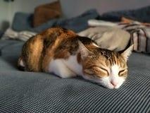 Śpiący kot Zdjęcia Stock