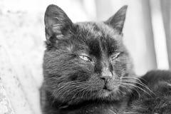 Śpiący, piękny tomcat, fotografia stock