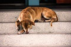 Śpiący pies Fotografia Stock