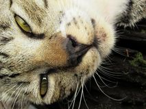 Śpiący Tabby kot W górę zakończenia zdjęcie stock