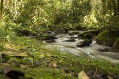 Śpieszyć się strumienia w dżungli Obrazy Royalty Free