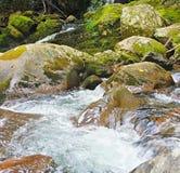 Śpieszyć się wody Fotografia Royalty Free