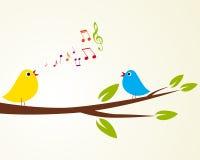 Śpiewacki ptak Zdjęcia Stock
