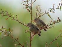 Śpiewacki ptak cieszy się sunbathing zdjęcia stock