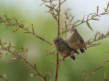 Śpiewacki ptak cieszy się sunbathing zdjęcia royalty free