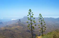 Śródlądowy Gran Canaria Zdjęcia Royalty Free