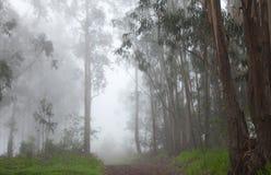 Śródlądowy Gran Canaria, mgła przy grzebieniem Valleseco, eukaliptus w Fotografia Royalty Free