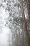 Śródlądowy Gran Canaria, mgła przy grzebieniem Valleseco, eukaliptus w Zdjęcia Stock