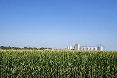 Śródpolna kukurudza, rząd uprawa Fotografia Stock