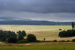 śródpolna lasu krajobrazu łąka fotografia royalty free