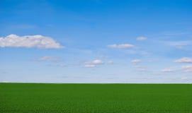 śródpolna zieleń zdjęcia stock