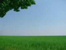 śródpolna zieleń Fotografia Royalty Free