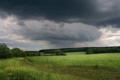 śródpolna zieleń Fotografia Stock