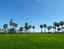 śródpolna zieleń Zdjęcie Royalty Free
