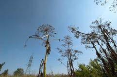 Śródpolne lato rośliny Zdjęcie Stock