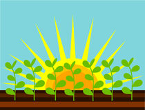 śródpolne rośliny Obraz Royalty Free