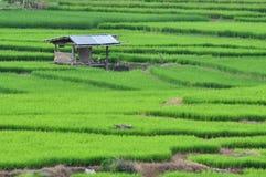 śródpolnej budy ryż taras Zdjęcia Stock