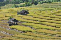 śródpolnej budy ryż taras Obrazy Royalty Free