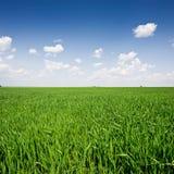 śródpolnej trawy śródpolny niebo Zdjęcia Stock