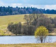 śródpolni łąkowi sceny wiosna drzewa obraz royalty free