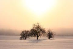 śródpolni śnieżni drzewa Zdjęcia Stock
