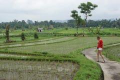 śródpolni Bali ryż Indonesia Fotografia Royalty Free