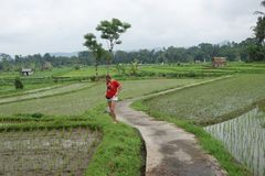 śródpolni Bali ryż Indonesia Fotografia Stock