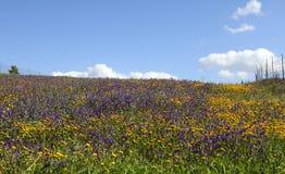 śródpolni kwiaty Obrazy Royalty Free