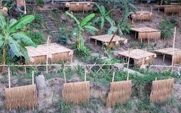 Śródpolni namioty na bambusowym i bananowym drzewie przy stroną obraz royalty free