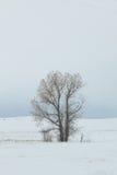 śródpolny śnieżny drzewo zdjęcia royalty free