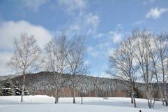 śródpolny śnieg Zdjęcie Stock