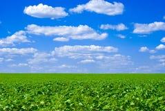 śródpolny błękit niebo Zdjęcie Royalty Free